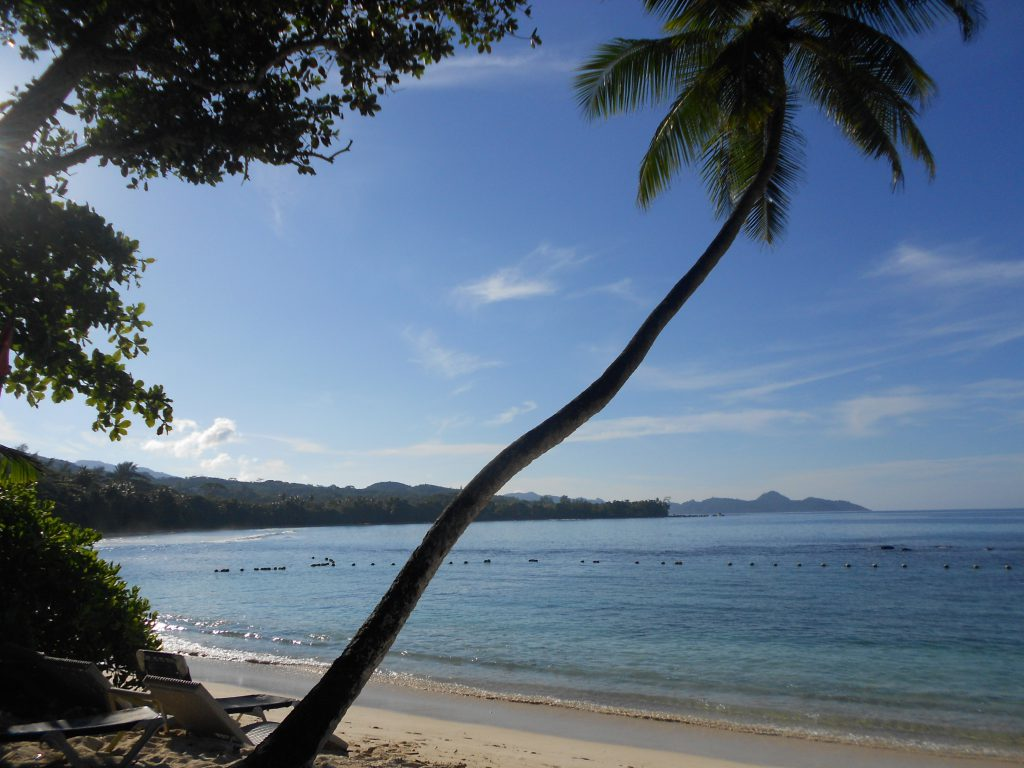 seychelles beach with coconut trees