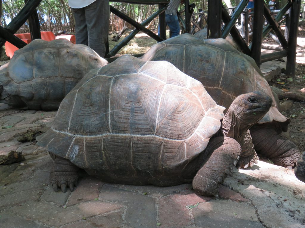a picture of a tortoise