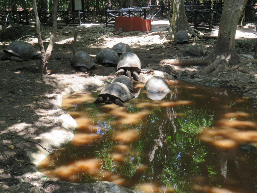a picture of tortoises in water