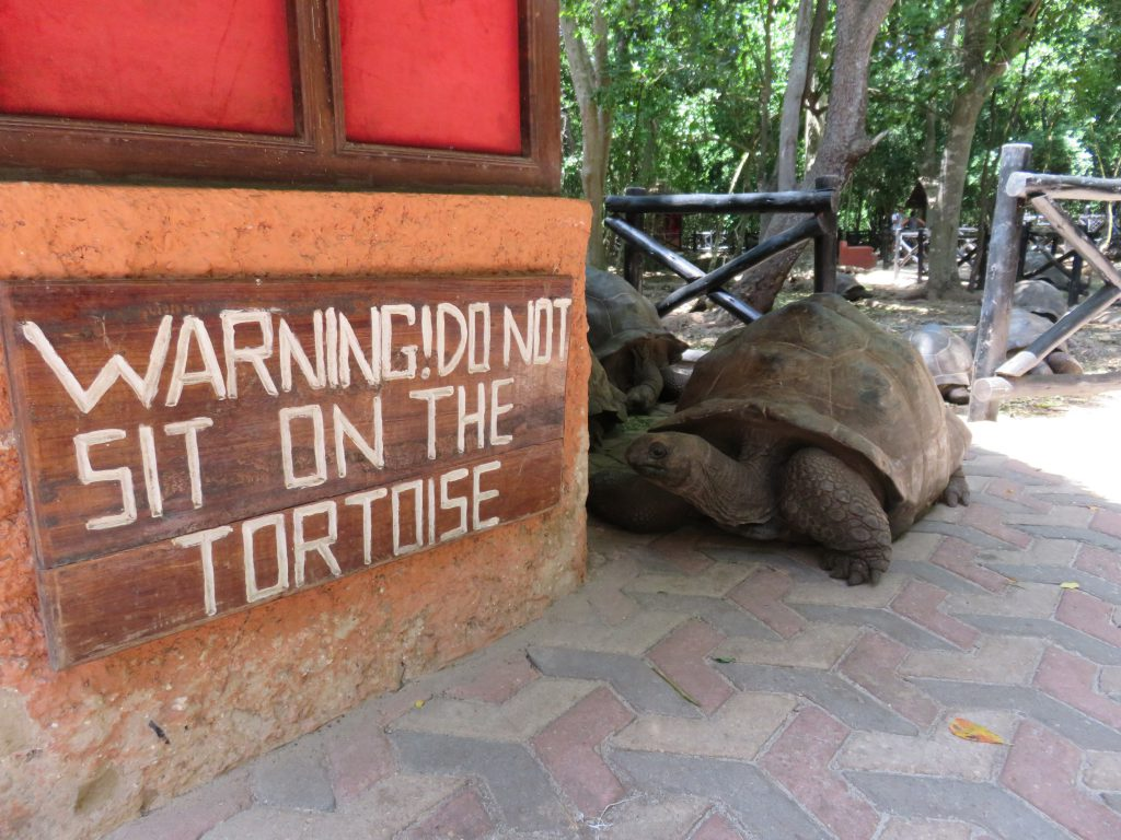 a picture of a sign to not sit on the tortoise