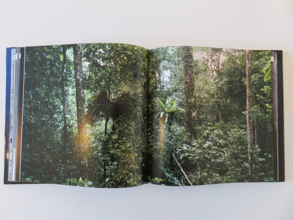 a photograph of the forest in Borneo