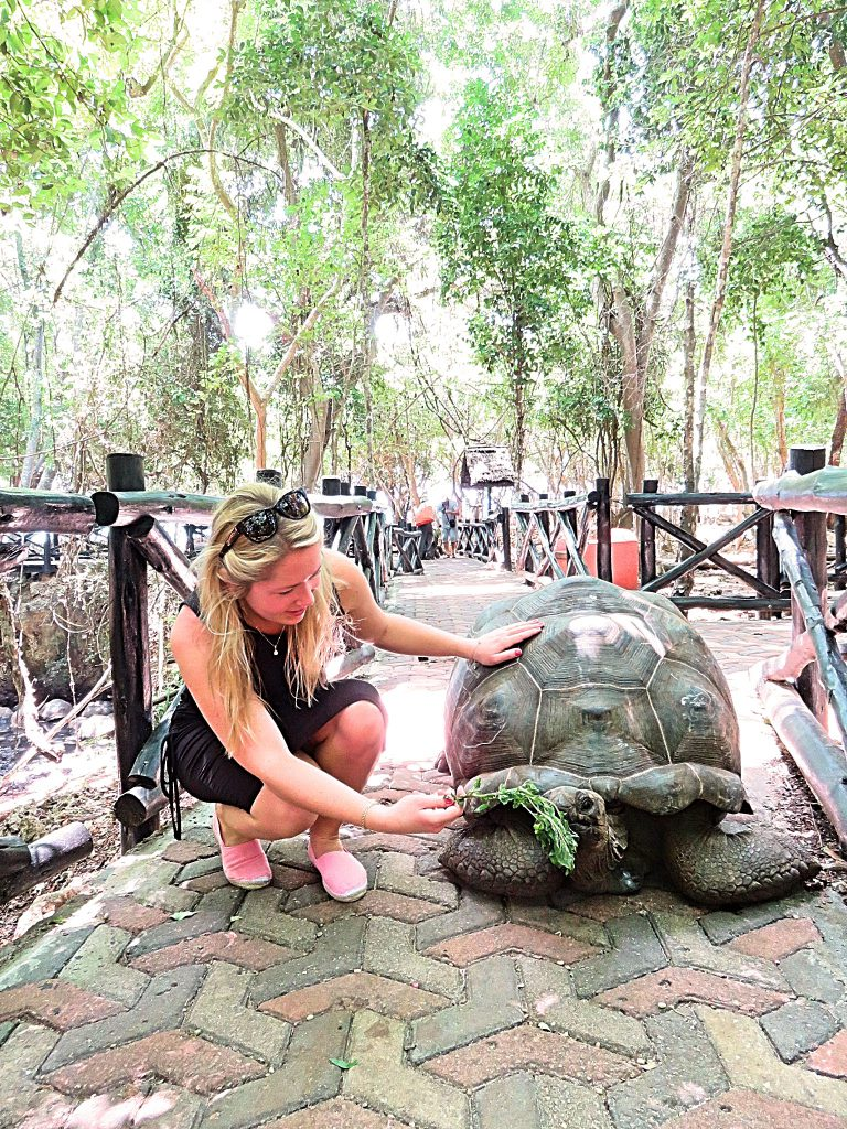 a picture of me feeding a giant tortoise