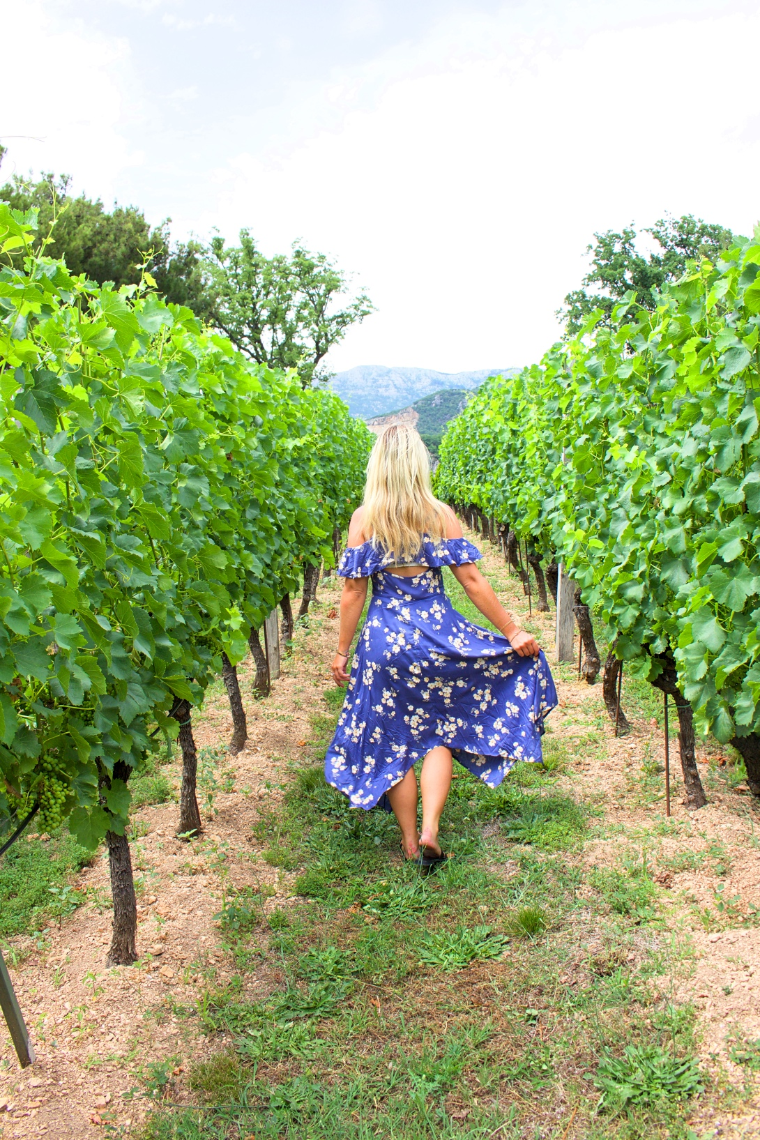 Savina winery