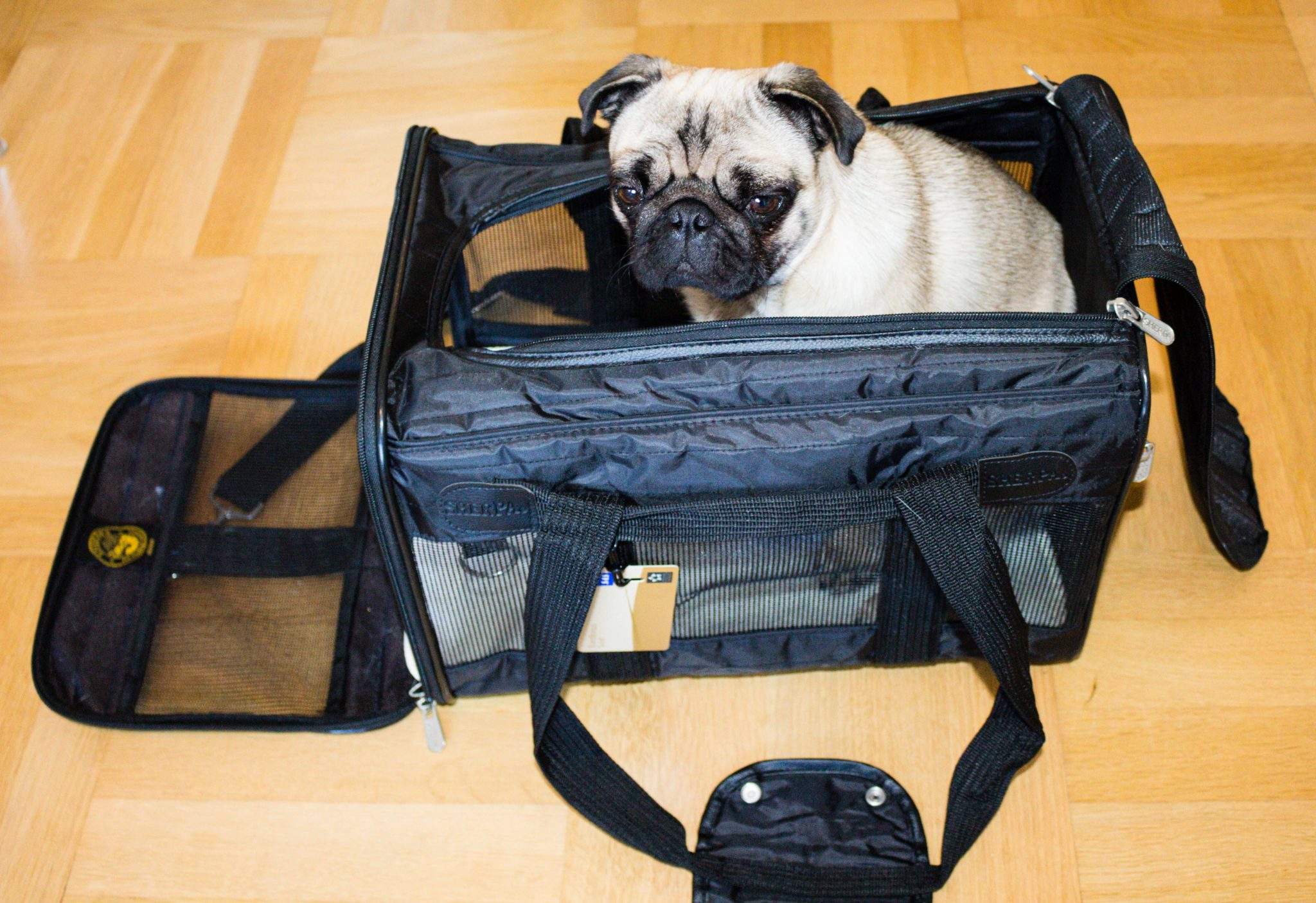 bil resa hund väska korg