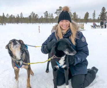 Lapland Sleddog